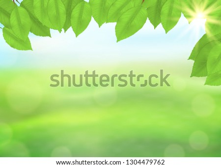 green nature background with