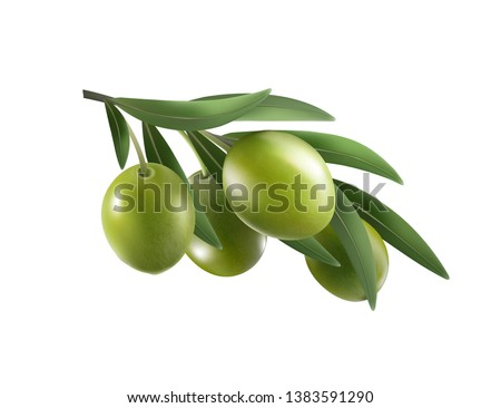 green olive branch isolated on
