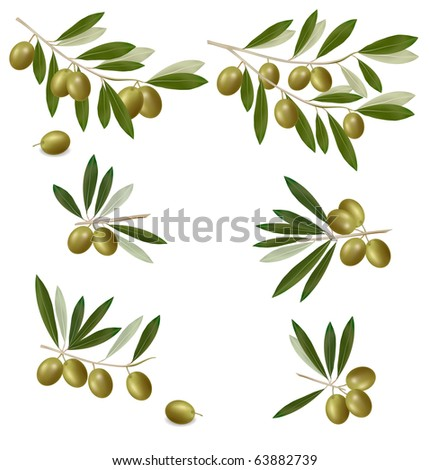 Green olive branch. Photo-realistic vector.