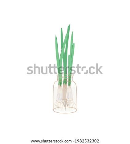 green onions grows in a jar