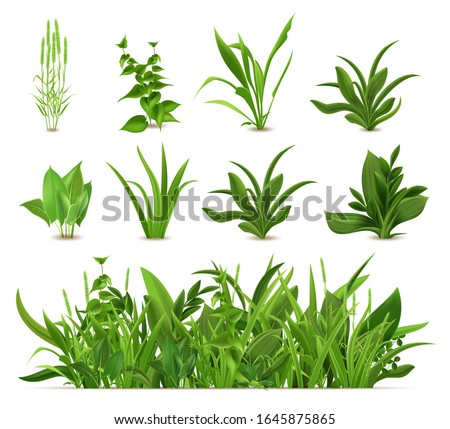 Green realistic spring grass. Fresh plants, garden seasonal growth grass, botanical greens, herbs and leaves vector isolated icons set. Natural lawn meadow bushes, floral vegetation border