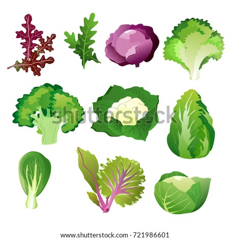 green salad leaves vector