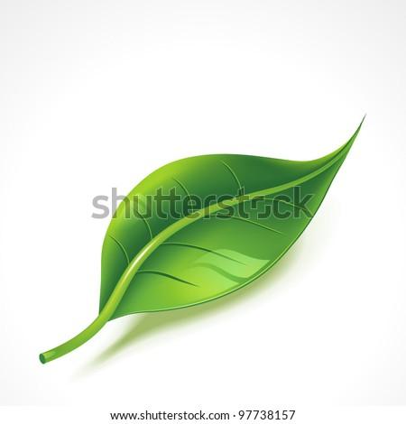 Green shiny leaf