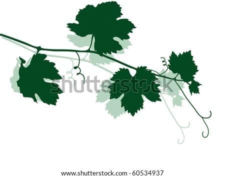 Green silhouette of vine leaves