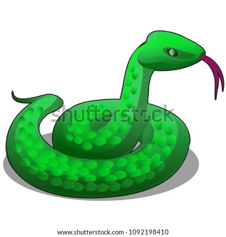 green snake isolated on white