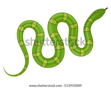 Green snake vector illustration. Isolated serpent on white background.