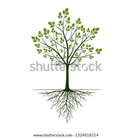Green spring Tree with leaves and Roots. Vector Illustration. Outline graphic.