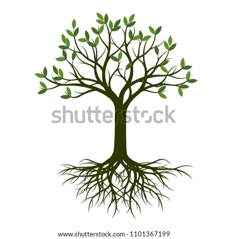 Green Spring Tree with Root. Vector Illustration. Plant in garden.