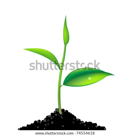 Green Sprout, Isolated On White Background, Vector Illustration