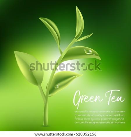 Green tea,Green tea leaf. Vector illustration