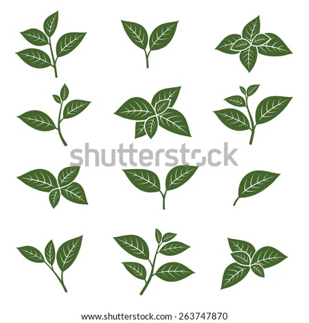 green tea leaf collection set