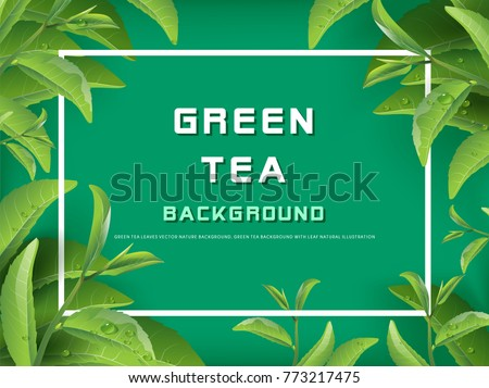 Green tea leaves vector nature background. Green tea background with leaf natural illustration.