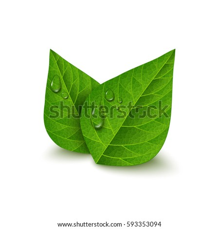 green tea leaves with water