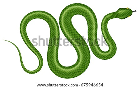 Stock Photo Green tree python vector illustration. Isolated tropical snake on white background.