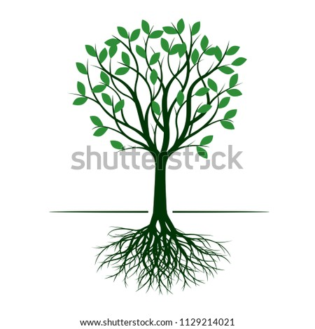 Green Tree with Leaf and Root. Vector Illustration.