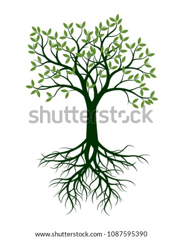 Green Tree with Leaves and Root. Vector Illustration and graphic element.