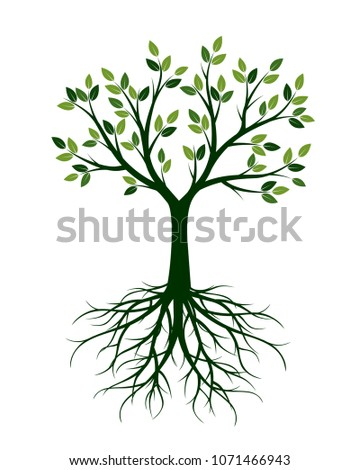 Green Tree with Leaves and Roots. Vector Illustration and floral element.