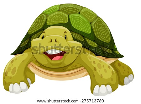 green turtle smiling on white