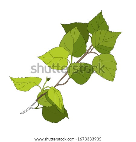 green twig of birch with young