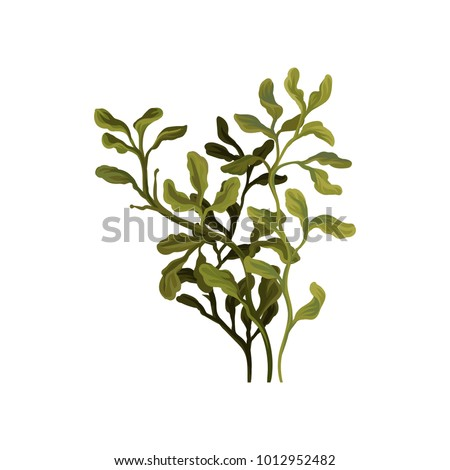 Shutterstock Green underwater seaweed, aquatic marine algae plant vector Illustration