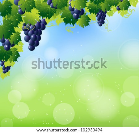 green wine and bunch of blue grapes on summer abstract blur background
