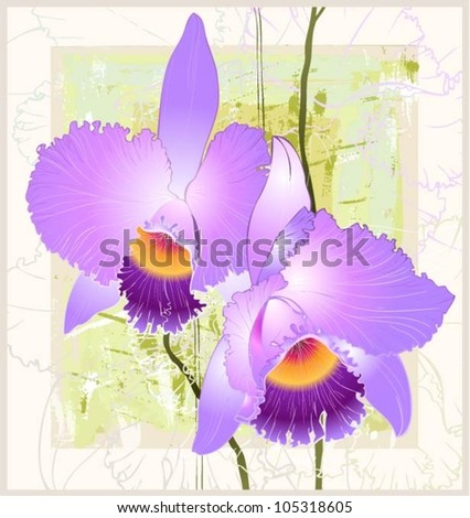 Greeting card with orchid. Illustration orchid.