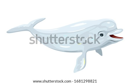 Gregarious beluga or white whale is Arctic and sub-Arctic cetacean. It s known as sea canary, due to its high-pitched calls and melonhead. Marine animal. Vector isolated illustration. Stockfoto ©