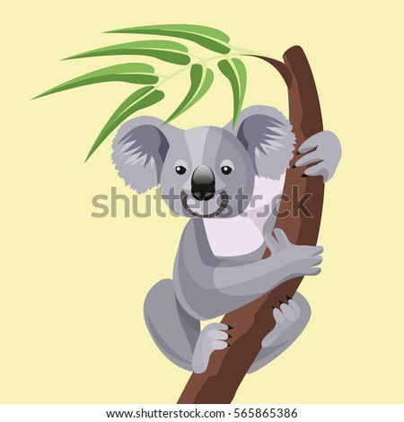 grey koala bear isolated on