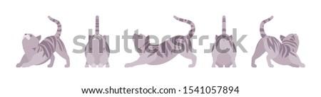 grey striped cat stretching