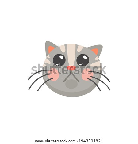 grey tabby kitten with big