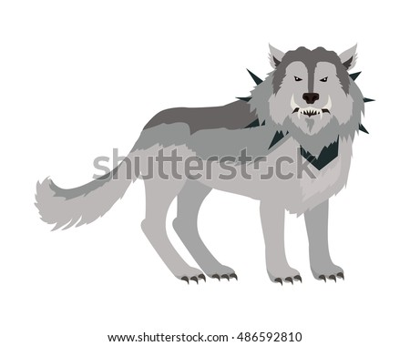 grey wolf in the collar with