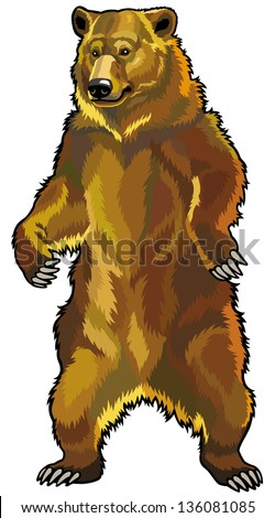 grizzly bear front view picture