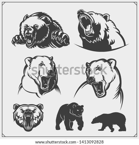 grizzly bear  polar bear  brown
