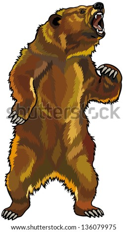 grizzly bear rearing angry pose