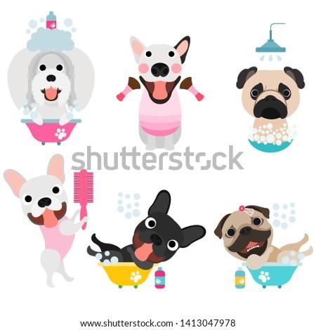 Grooming dogs, Grooming pet, Cute grooming dogs