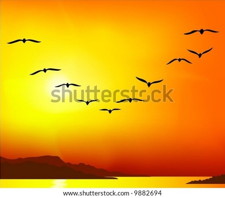group of birds on sunset background