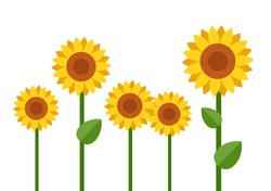 Group of blooming sunflowers different sizes vector flat material design isolated on white