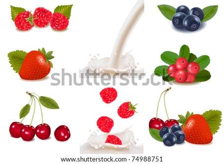Group of cranberries, blueberries, raspberries and fruits falling into the milk splash. Photo-realistic vector illustration.