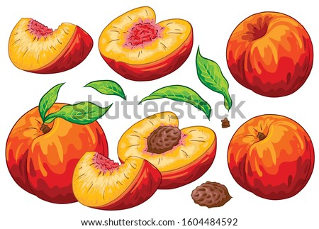Group of fruit cut peaches, peach seed and leaves. Isolated on white background. Peach illustration, hand draw cartoon vector. Colorful fruits.