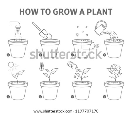 Growing a plant in the pot guide. How to grow a flower step-by-step instruction. Sprout growth process. Gardening recommendation. From seed to flower. Isolated flat line vector illustration