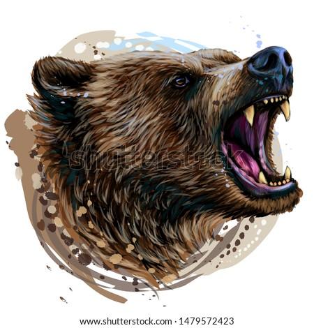 growling bear color portrait
