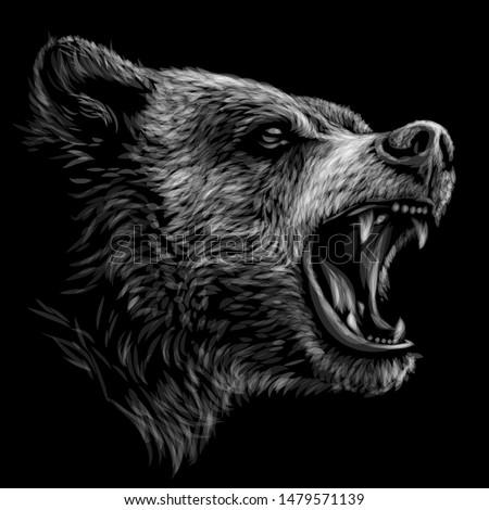 growling bear  monochrome