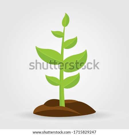 Growth of plant, from sprout to vegetable. Planting tree. ストックフォト ©