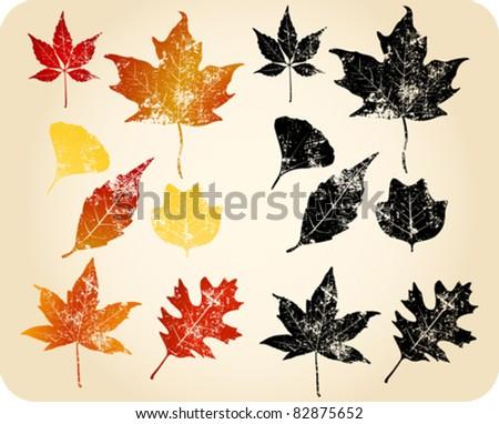 Grunge autumn leaves. Oak, Sycamore, Maple, Sweetgum, Gingko Biloba...