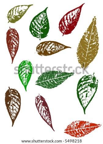 Grunge elements - Autumn Leaves 4.   Highly Detailed vector grunge elements