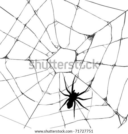 Grunge web spider over white background