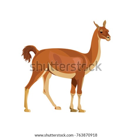 guanaco standing  side view