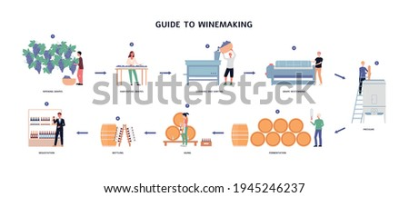 Guide to winemaking process - from ripening grapes to natural wine. Foto stock ©