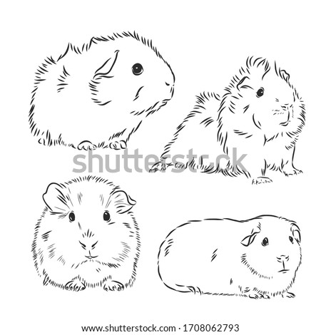 guinea pig or cavy inky hand