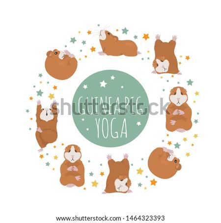 guinea pig yoga poses and